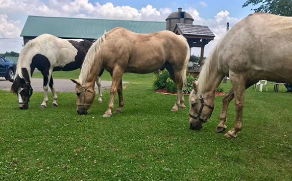 3 horses eating grass at Blue Haven Stables